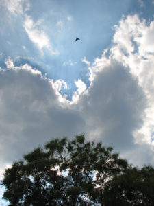 Photo of tree, clouds and bird flying above.